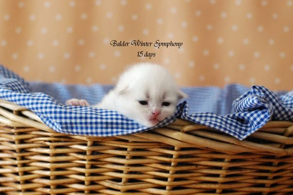 balder-winter-symphony-2020-07485ACA37-43B4-6D91-E717-6DA02CA1A9AC.jpg