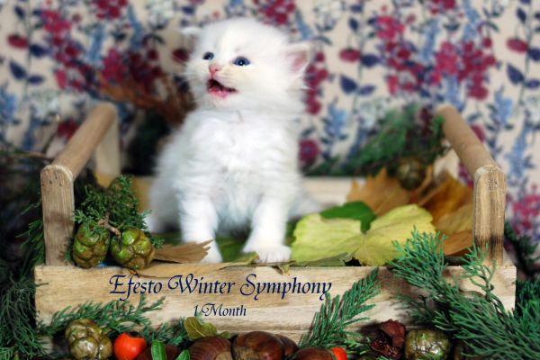 efesto-winter-symphony-1-month-06D3A314C3-DC01-73D4-690D-AD6C12A47052.jpg