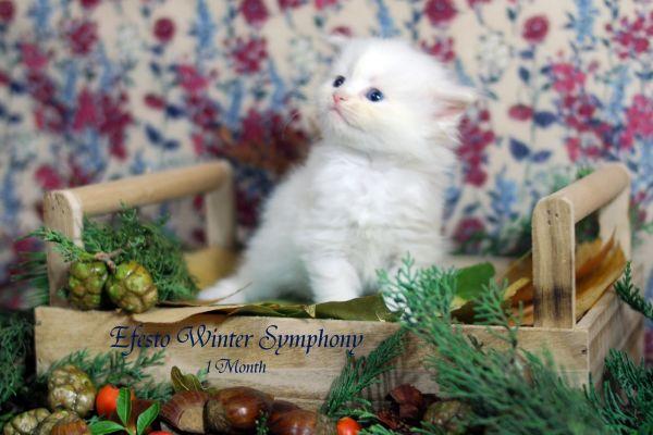 efesto-winter-symphony-1-month-07F9AF1BB9-9596-20A5-B226-80DC27983B10.jpg