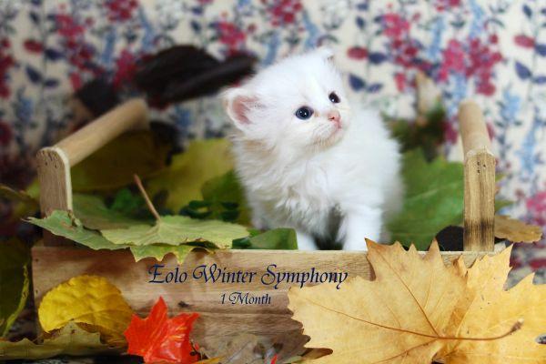 eolo-winter-symphony-1-month-0182F3069D-2824-6514-FE05-EAEA355B0EE2.jpg