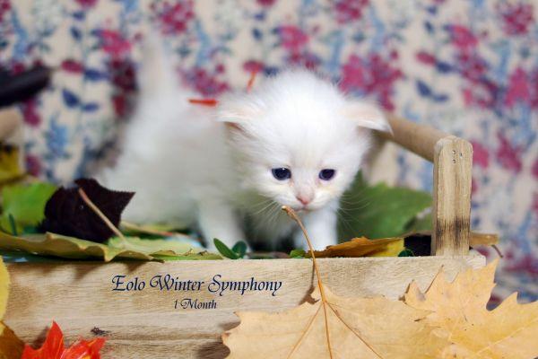eolo-winter-symphony-1-month-05A68FEAFC-F3EA-1EFA-B4BB-9F3F064F6EB7.jpg