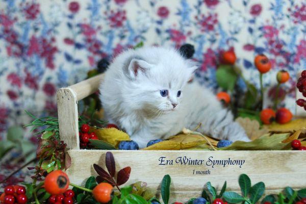 era-winter-symphony-1-month-01E232CC61-69D2-E839-3080-02E861062AB6.jpg