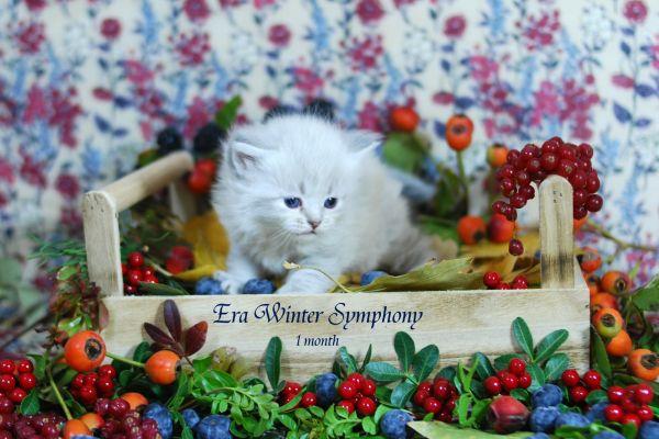 era-winter-symphony-1-month-0385778D5C-96B5-6E3B-1686-2E268FCD80E8.jpg