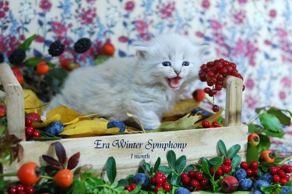 era-winter-symphony-1-month-0536D0DA00-A5CD-525C-EF6D-EA3F3C952478.jpg