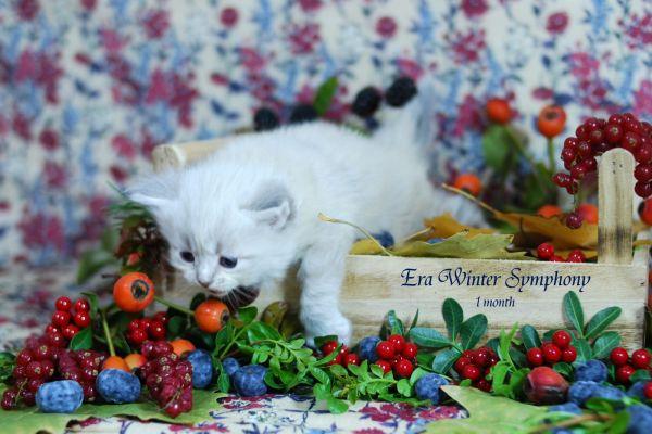 era-winter-symphony-1-month-07D692023A-4188-3B98-A5C3-CBBD38B3783B.jpg