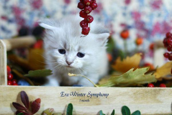 era-winter-symphony-1-month-10B7D11293-6D9B-3401-D144-760D95125A4F.jpg