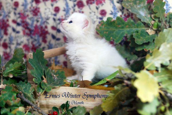 ermes-winter-symphony-1-month-0205B4EE95-6EBD-2035-1F9C-70ED660BD3C4.jpg