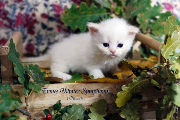 ermes-winter-symphony-1-month-03E890899B-CE37-63E8-E3E7-F0D883E5CFBD.jpg