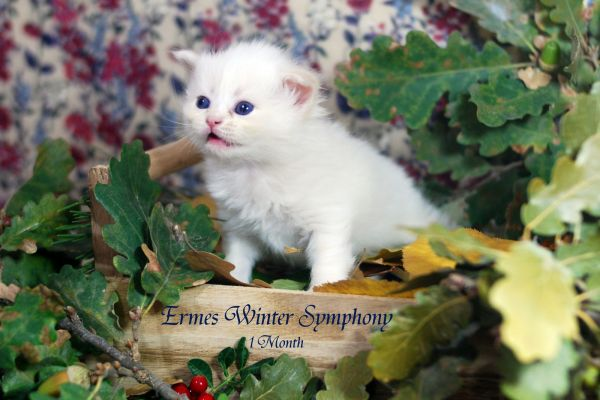 ermes-winter-symphony-1-month-0430D9965F-2A5B-56F9-EB71-6027E15023E5.jpg
