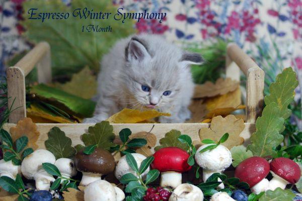 espresso-winter-symphony-1-month-023EAA3B99-BF1A-FE2F-17FF-F16BC4848B2D.jpg