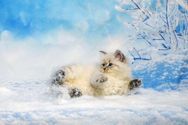 fistashka-winter-symphony-20B918DD20-D941-446C-6DC3-7AC2EF61C074.jpg