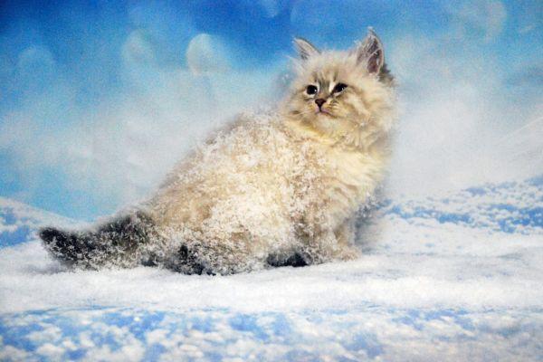 fistashka-winter-symphony-33DE7061A6-1FF7-2A07-73E9-5C4478055865.jpg
