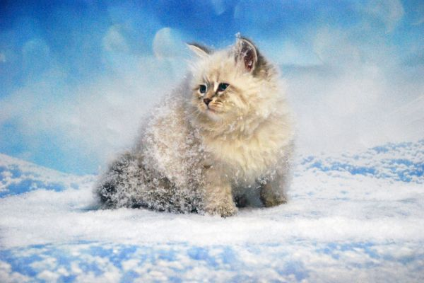 fistashka-winter-symphony-3502B07675-655E-C59C-F616-A39112AC842D.jpg