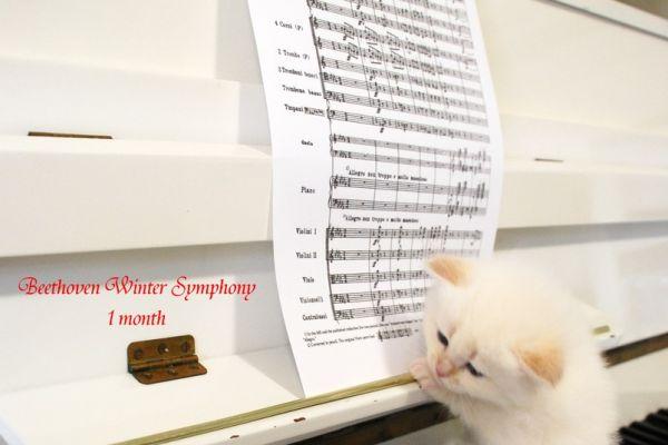 beethoven-winter-symphony-1-month-02E31A9881-F24D-E600-0140-FAA0F3F67B67.jpg
