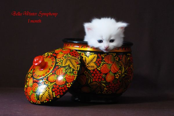 bella-winter-symphony-1-month-0238A8A358-9470-E6F1-E161-259EB070B6BD.jpg